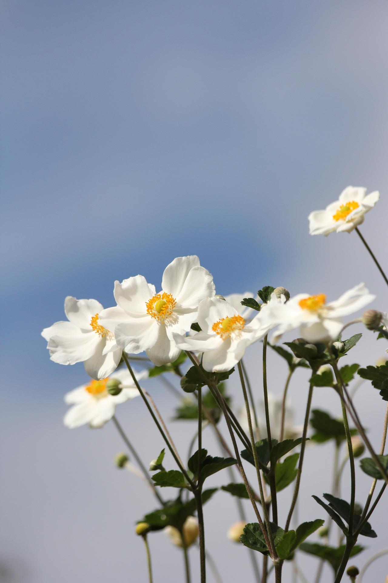 Blütenblätterregen