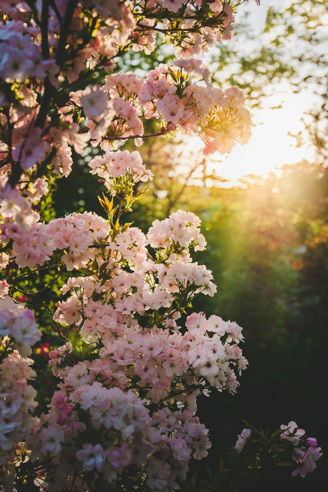 Frühlingsfrischeduft
