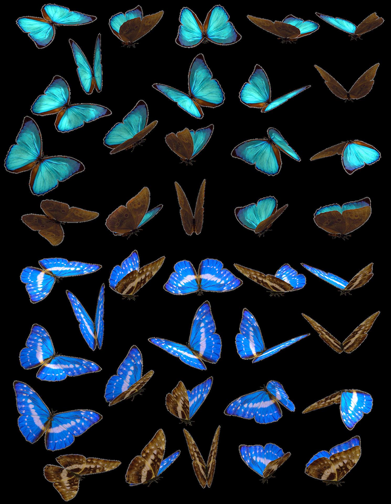 Schmetterlingsflügelgeflatter