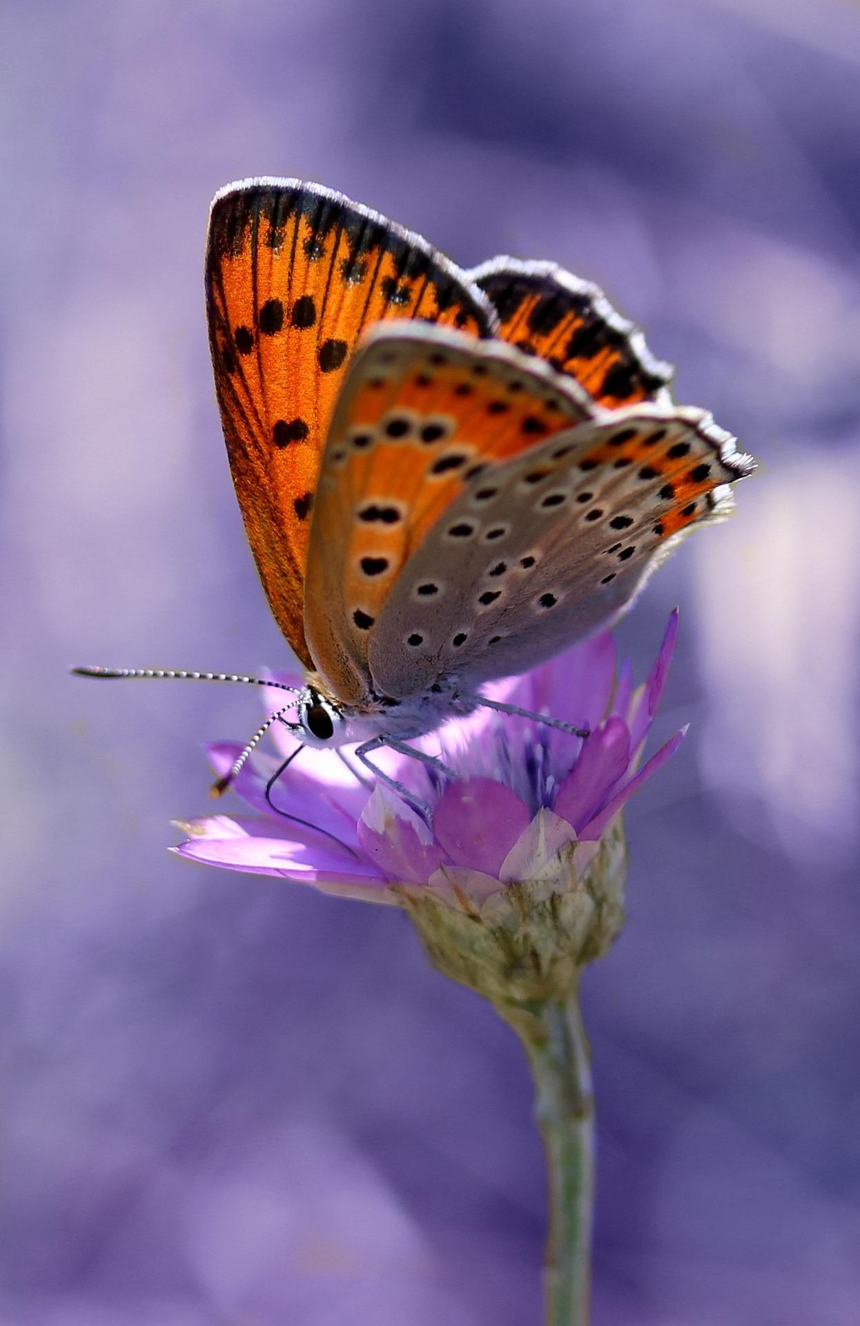 Schmetterlingsreigen