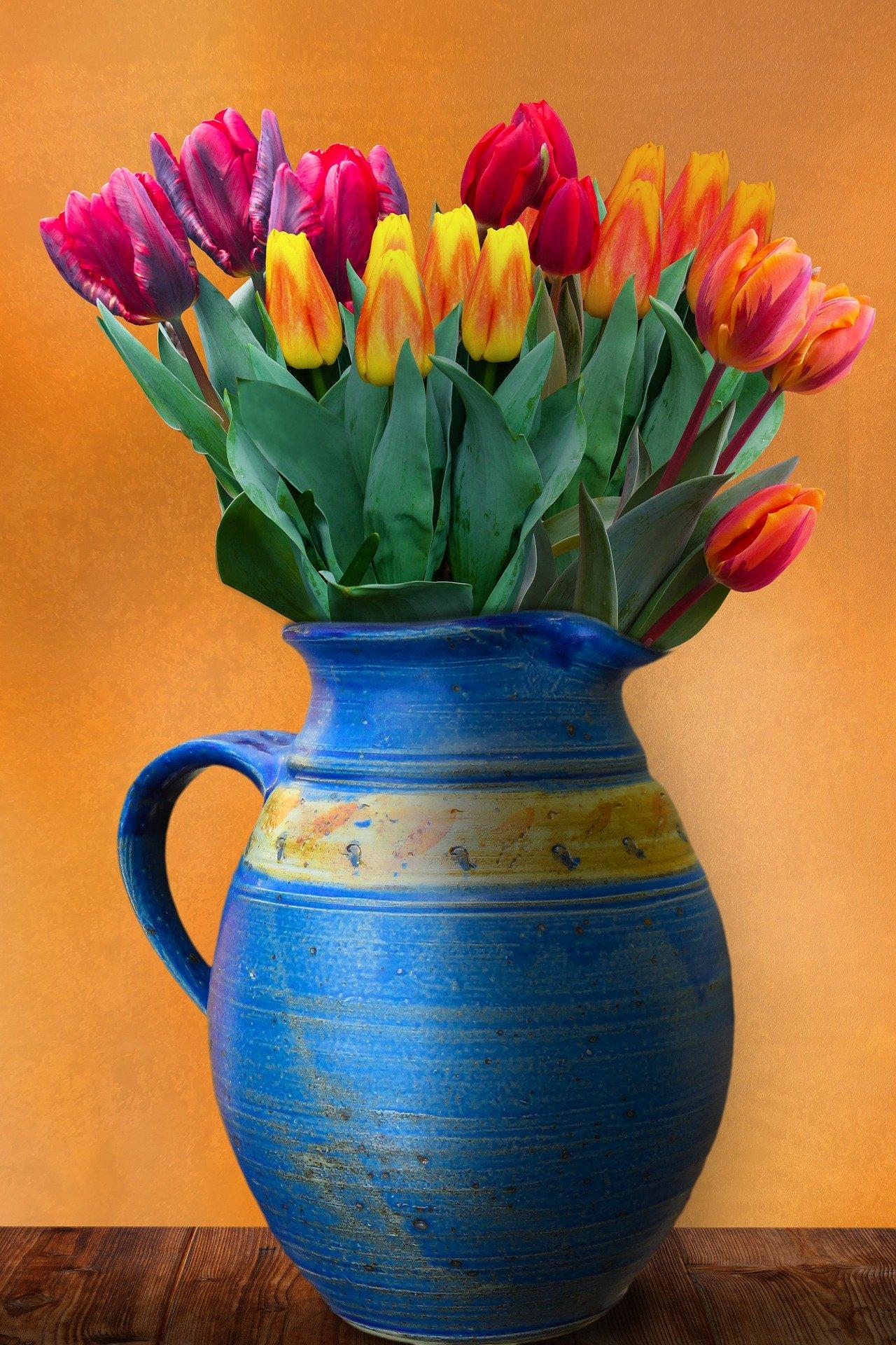 Tulpenwunder