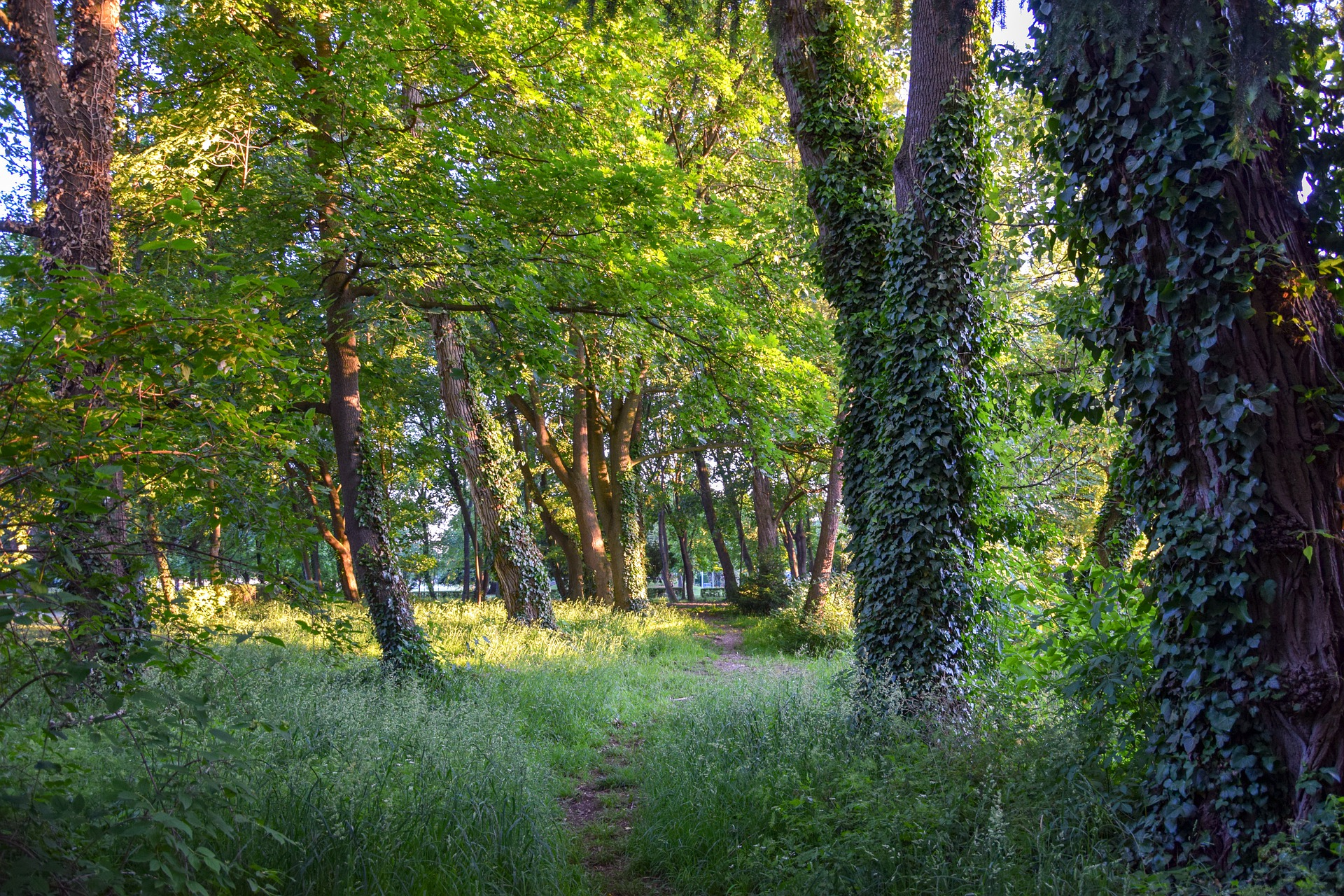 Waldesrauschen